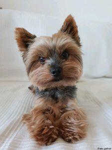 Bürohund Bino
